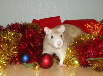 Lestat loves Christmas!  (RIP little boy)