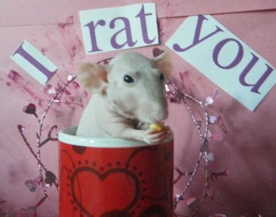 "Ginger - instead of ""i love you"" it's ""I rat you"""
