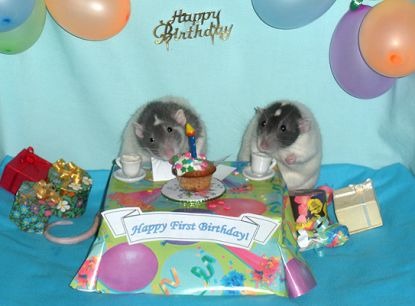 Rodney & DiNozzo's first birthday party! (R.I.P. ? )